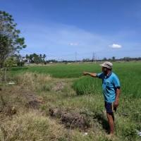 Mandiri: 1 bidang tanah dengan total luas 5938 m2 di Kabupaten Pinrang