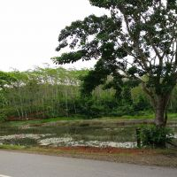 1. Sebidang tanah dengan total luas 8.010 m2 berikut segala sesuatu diatasnya terletak di Desa Lunjuk Kabupaten Seluma
