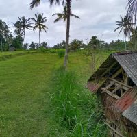 BPD Bangli (20-04)b: 2 (dua) bidang tanah SHM No. 208 luas 2100 m2 dan SHM No. 209 luas 2100 m2 di Ds. Undisan, Kec. Tembuku, Kab. Bangli