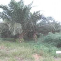 1 bidang tanah dengan total luas 9360 m2 di Kabupaten Mamuju