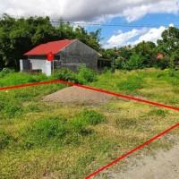 (BRI Watansoppeng) tanah (SHM No.3510), Luas tanah 195 m2, di Jl Masago, Kel/Desa Lalabatrilau, Kec.Lalabata,Kab. Soppeng