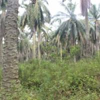 Bank Mandiri - 1 bidang tanah dengan total luas 19600 m2 di Kabupaten Rokan Hilir