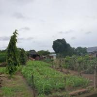 1 bidang tanah SHM No. 01774/Polewali dengan total luas 2715 m2 di Kabupaten Bulukumba (BRI Bantaeng)