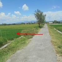 BTN - 1 Paket yaitu 2 bidang tanah dengan total luas 5560 m2 SHM 1039 dan1040, di Desa Ngrundul, Kec. Kebonarum,Kab. Klaten