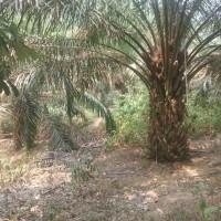 1 bidang tanah dengan total luas 35726 m2 di Kabupaten Batang Hari