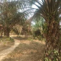 1 bidang tanah dengan total luas 38019 m2 di Kabupaten Batang Hari