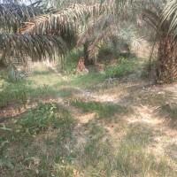 1 bidang tanah dengan total luas 26633 m2 di Kabupaten Batang Hari
