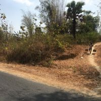 PT.BRI REMBANG: 1b. Tanah, SHM No. 0045, luas tanah 638 m2, di Desa/Kel. Pranti, Kec. Sulang, Kab. Rembang