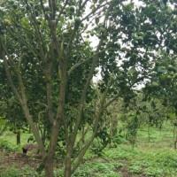 1 bidang tanah dengan total luas 9135 m<sup>2</sup> di Kabupaten Bangli