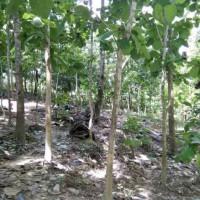 1 bidang tanah dengan total luas 8450 m2 di Kabupaten Muna