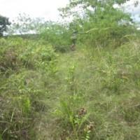 Bank Mandiri RRCR Mdn-2. Tanah, luas 10021 m2, SHM 205, di Desa Suka Maju, Kec. Rambah, Kab. Rokan Hulu