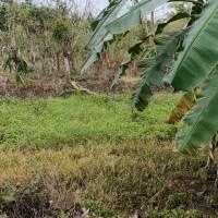 1 bidang tanah dengan total luas 17068 m2 di Kabupaten Tanah Laut