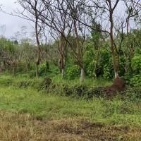 1 bidang tanah dengan total luas 16898 m2 di Kabupaten Tanah Laut