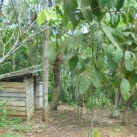 BRI Tenggarong - 1 bidang tanah dengan total luas 7537 m2, SHM No. 271, berikut segala sesuatu di atasnya, di Kabupaten Kutai Kartanegara