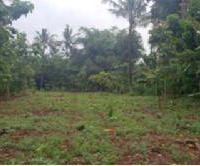 BNI RRR Semarang: 1 bidang tanah dengan   luas 1.618 m2  di Desa Sinanggul Kec. Mlonggo  Kabupaten Jepara