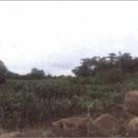 1 bidang tanah dengan total luas 4890 m2, SHM No.381 di Desa Perigi, Kec. Pringgabaya, Kab. Lombok Timur (Bank Mandiri RRCR Bali Nusra)
