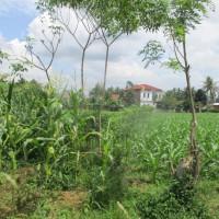 [Mandiri] 1a. Sebidang tanah luas 2820m2 berikut turutannya sesuai SHM No 380 di  di Nagari Koto Tangah Simalanggang Kec Payakumbuh