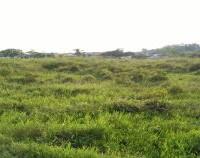PT.PNM Kaltara : 2 bidang tanah kosong SHM No.04794 luas 849 m2 & SHM No.04792 luas 383 m2 terletak di Juata Permai Kota Tarakan