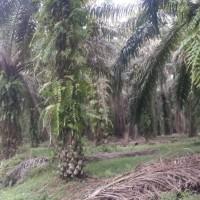 1 bidang tanah dengan total luas 20240 m<sup>2</sup> di Kabupaten Merangin