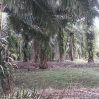 1 bidang tanah dengan total luas 20000 m<sup>2</sup> di Kabupaten Merangin