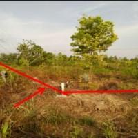 PT.PNM Kaltara : 1 bidang tanah kosong SHGB No.00163 luas tanah 1870 m2 terletak di Juata Permai Kota Tarakan