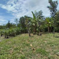 Bank Mandiri : 1 (Satu) bidang tanah seluas 480 m2 sesuai SHM No. 00518 di Kabupaten Musi Rawas