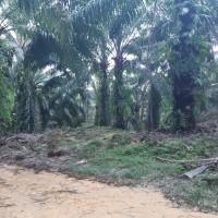 PT. BRI KC PANYABUNGAN : Tanah seluas 18.685 m2, SHM No.290 An. Samsul Bahri, di Desa Bangun Saroha Kec. Ranto Baek