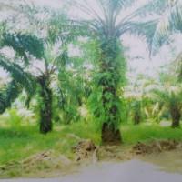 1 bidang tanah dengan total luas 12267 m<sup>2</sup> di Kabupaten Tanjung Jabung Timur