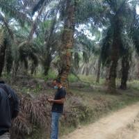 1 bidang tanah dengan total luas 19523 m<sup>2</sup> di Kabupaten Tebo