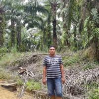 1 bidang tanah dengan total luas 22493 m<sup>2</sup> di Kabupaten Merangin