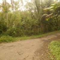 BJB.Banten:1 bidang tanah dengan total luas 2586 m, SHM No.801 di Jln. Desa Pasir Kanaga, Ds. Wr.Gunung,Kec. Wr.Gunung Kab. Lebak