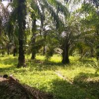 1 bidang tanah dengan total luas 15440 m<sup>2</sup> di Kabupaten Asahan