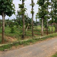(BRI PAMEKASAN) : 1 bidang tanah seluas 2556 m2 ; SHM 89/Pakong di Kabupaten Pamekasan