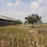 BNI 3 : Tanah/bangunan seluas 1775 m2 berikut bangunan di Ds Jayamulya, Kec Kroya,Kab  Indramayu