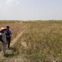 BNI 4 : Tanah seluas 9350 m2 di Ds Kedokan, Kec Gabus, Kab  Indramayu