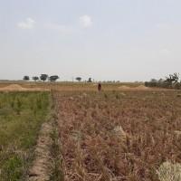 BNI 5 : Tanah seluas 7988 m2 di Ds Kedokan Gabus, Gabus Wetan, Kab  Indramayu