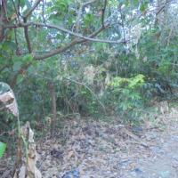 1.c.PT.BNI RRR Palembang : Sebidang tanah luas 300 m2 dan segala sesuatu diatasnya di Kel.Karya Baru Kec.Alang2 Lebar Palembang