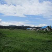 1 bidang tanah dengan total luas 2890 m2 di Kabupaten Poso