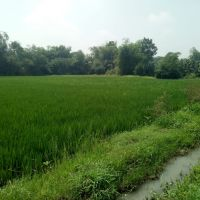 1 bidang tanah dengan total luas 2770 m<sup>2</sup> berikut bangunan di Kabupaten Sukoharjo