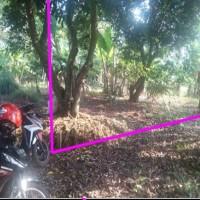 PNM Tegal: 1 bidang tanah SHM No 00698 luas 200 m2 berikut segala sesuatu yang berdiri diatasnya di Desa Brayo,Kec.Wonotunggal, Kab Batang