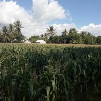 1 bidang tanah dengan total luas 3248 m<sup>2</sup> di Kabupaten Lombok Barat