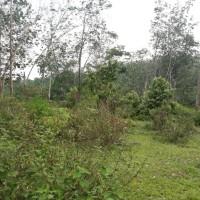 BRI Kotapinang: 2. 1 bidang tanah dengan total luas 6800 m2 di Kabupaten Labuhan Batu (SHM No 1085)