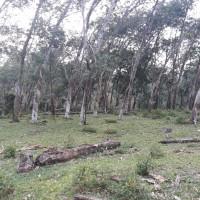 BRI Kotapinang: 3. 1 bidang tanah dengan total luas 9100 m2 di Kabupaten Labuhan Batu (SHM No. 685)