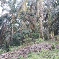 BRI Kotapinang: 4. 1 bidang tanah dengan total luas 19700 m2 di Kabupaten Labuhan Batu (SHM No 242)