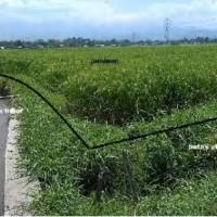PNM - Sebidang tanah dengan luas 4.245 m2, SHM No. 51/Jetis, Kabupaten Situbondo
