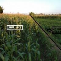 PNM - Sebidang tanah dengan total luas 2.010 m2, SHM No. 812/Jatisari, Kabupaten Situbondo