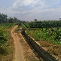PNM Jember - Sebidang tanah dengan luas 5170 m2, SHM No. 727/Ramban Kulon, Kabupaten Bondowoso