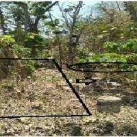 PNM Jember - Sebidang tanah dengan total luas 4.115 m2, SHM No. 301/Sempol, Kab. Bondowoso
