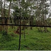 PNM Jember - 2 bidang tanah dengan total luas 4664 m2, SHM No. 1294 dan No. 1391, Desa Nogosari, Kab. Bondowoso