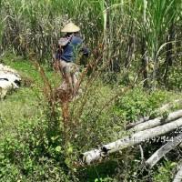 1 bidang tanah dengan total luas 2284 m<sup>2</sup> di Kabupaten Rembang